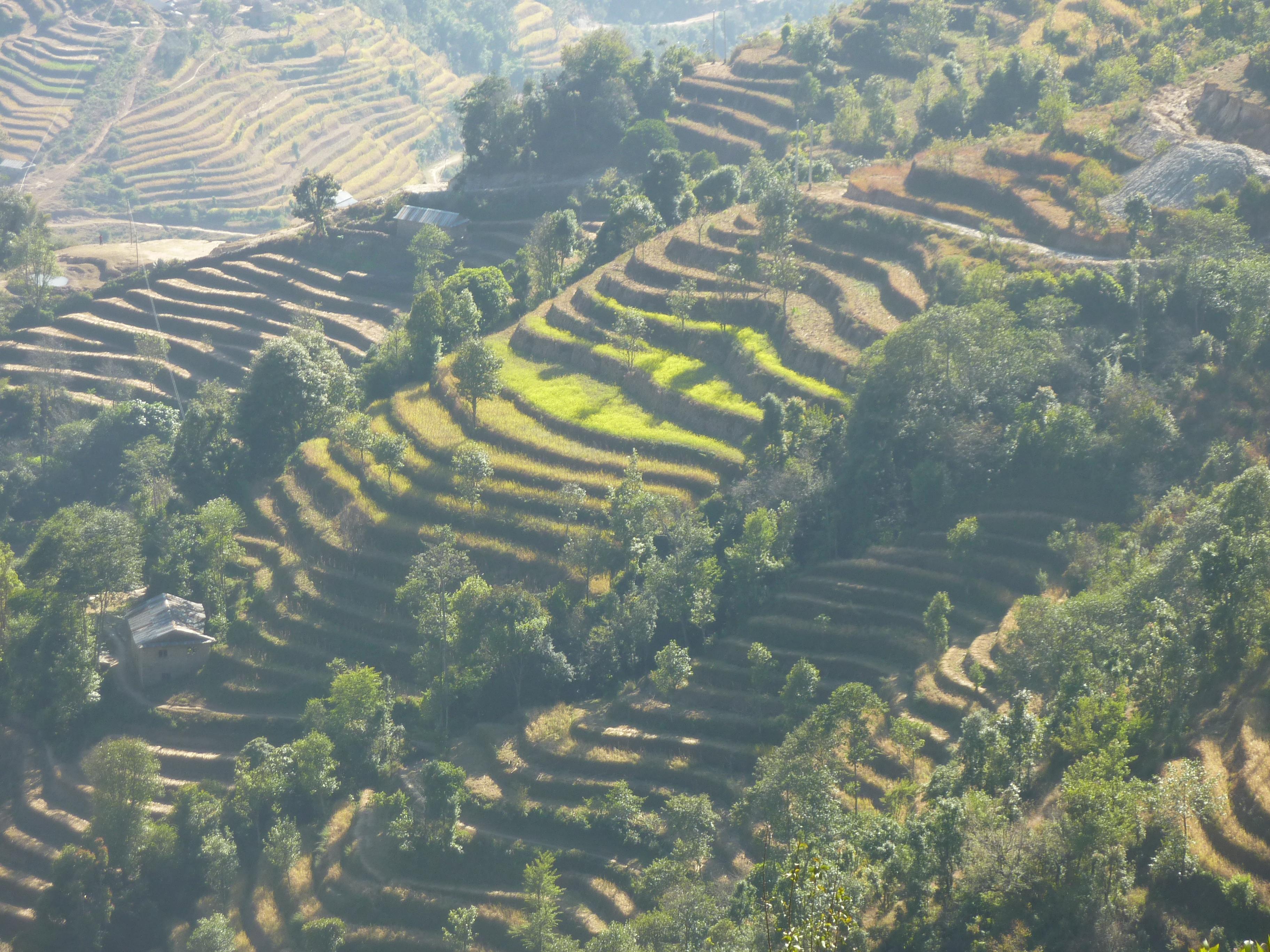 Helambu Terraces