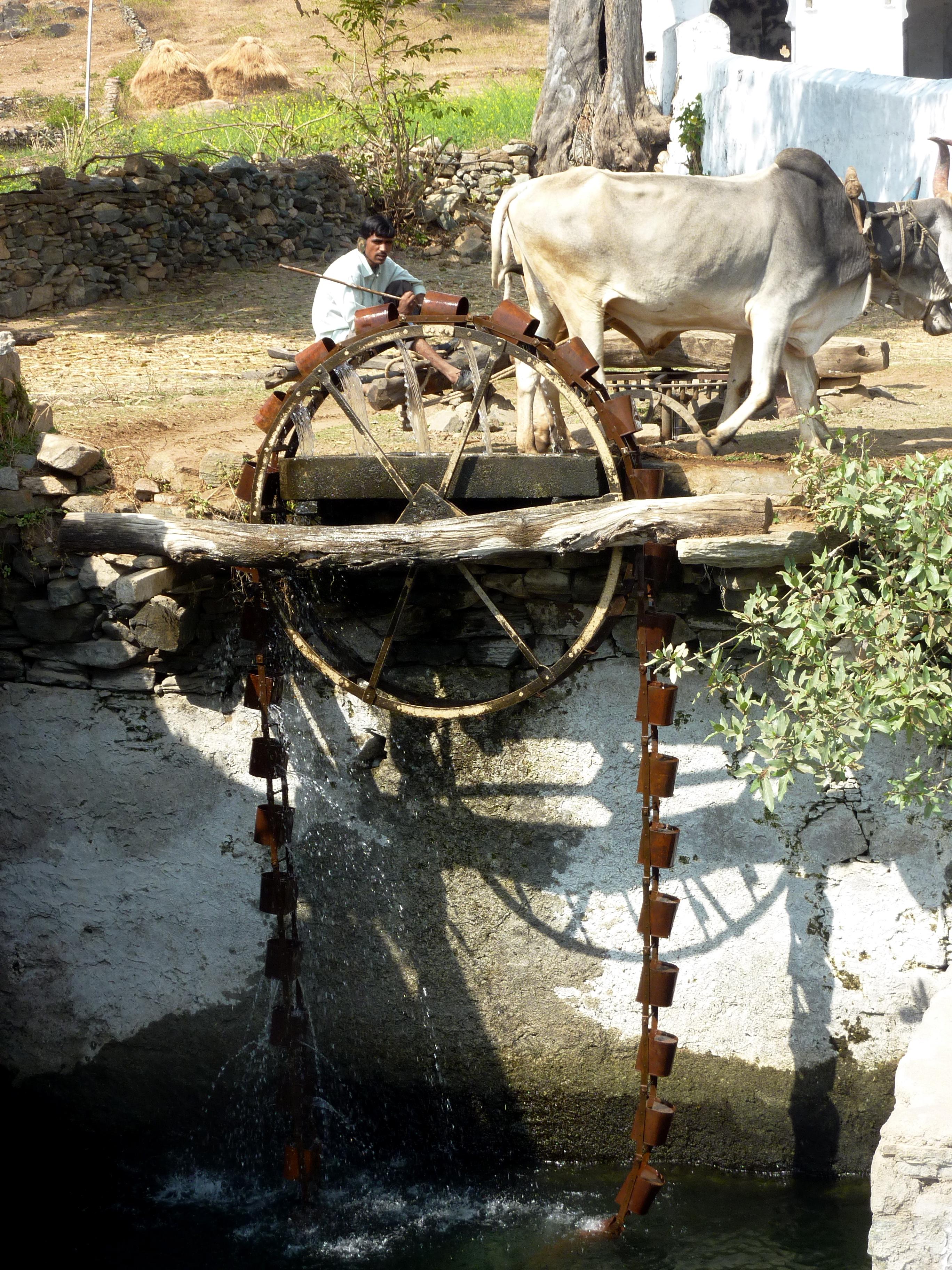 Cow Powered Water Wheel