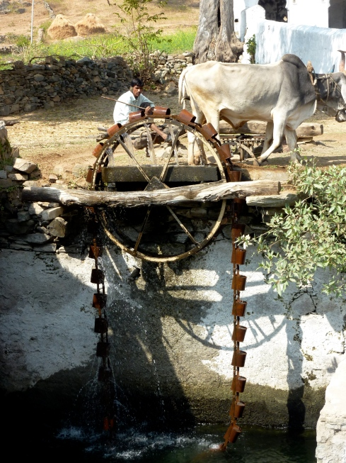 Cow Powered Water Wheel