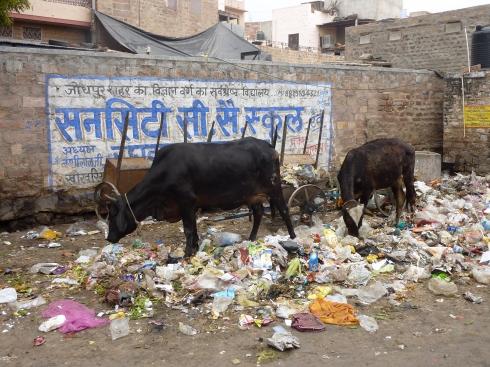 Non-organic Trash Cows